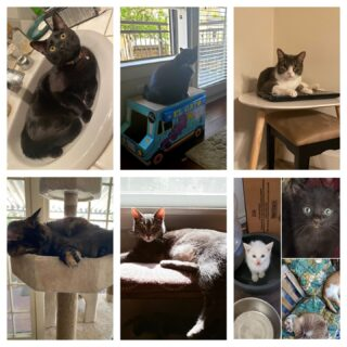 Happy International Cat Day!   Did you know cats spend 70% of their lives sleeping?   According to the pictures our employees showed off on Slack, that data makes a lot of sense!   #BeCatCurious #InternationalCatDay🐱❤ #lifeatoutlook #cats #catday #catsofinstagram