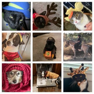 Our pets are festive too! 🎃  We are kicking off Halloween week early with a pet costume contest! The winner will be announced Monday but in the meantime, look at all our participants!  Who's your favorite?  #lifeatoutlook #halloweenatoutlook #petcostume #petsofinstagram