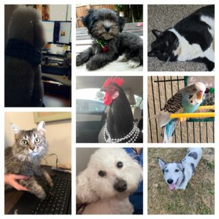 On National Take Your Dog to Work Day, we decided to show off all our pet family keeping us company while working from home. From dogs to roosters, if they are home while we work, then they're coworkers!   #nationaltakeyourdogtoworkday #pets #cats #dogs #birds #rooster #inclusive #lifeatoutlook